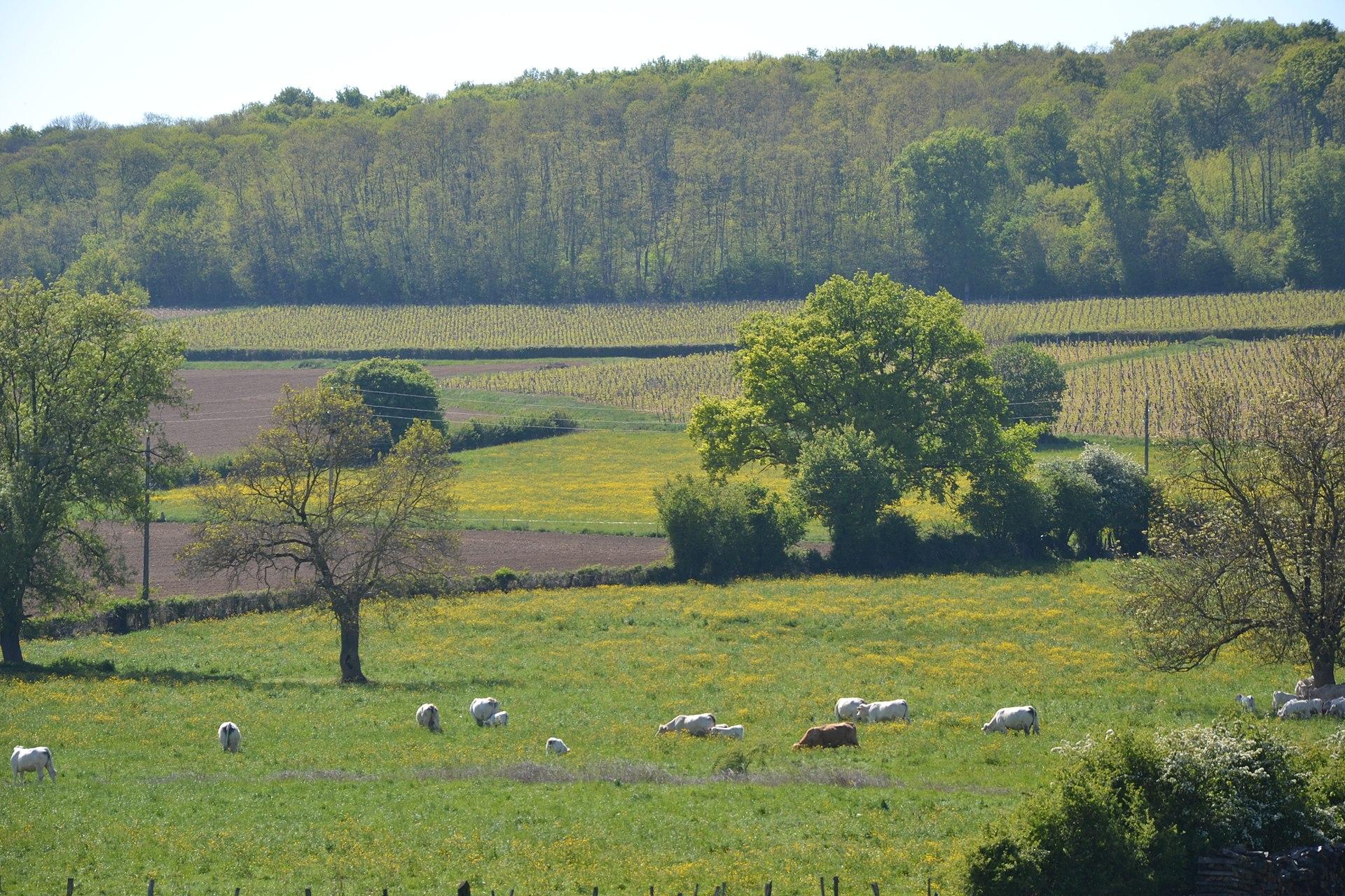 Saône-et-Loire    MA CIRCONSCRIPTION, MON TERRITOIRE D'ÉLECTION