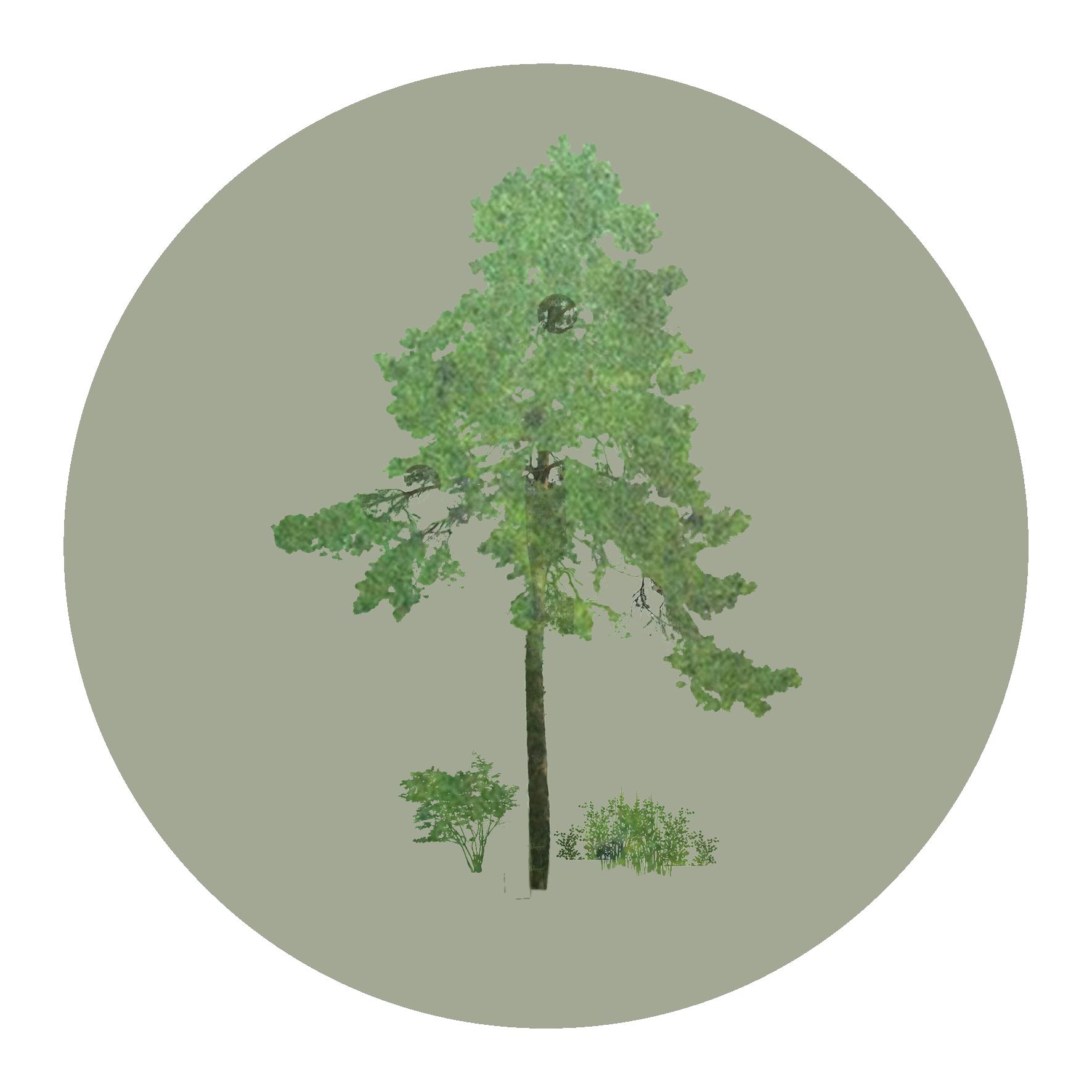 Vegetation centered.png