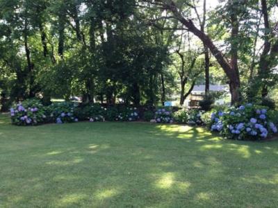Papa's garden.jpg