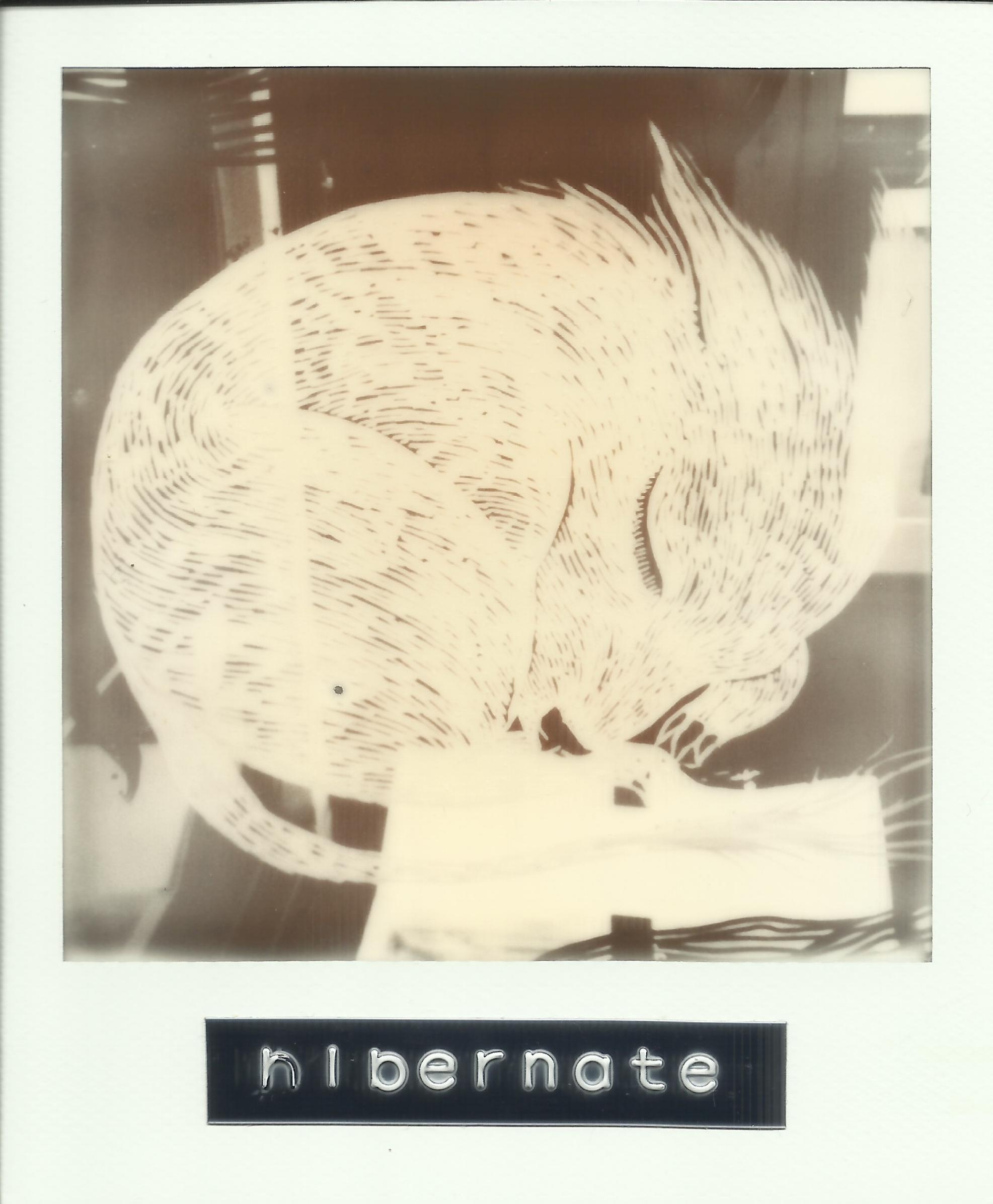 Hibernate Polaroid