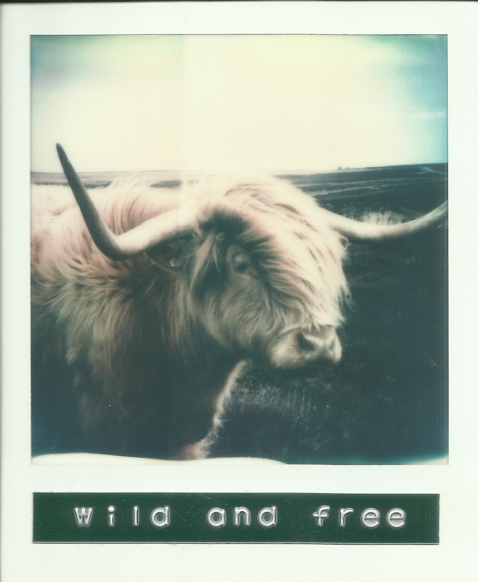 Wild and Free Polaroid