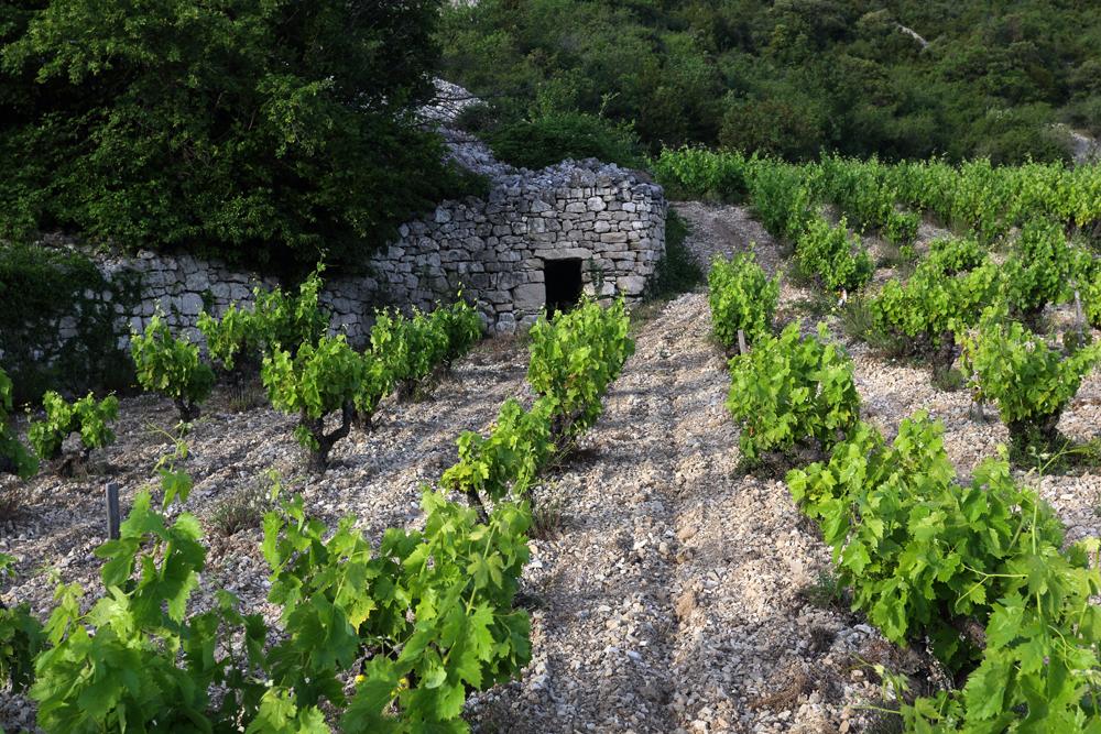 - Situé entre Millau et Montpellier dans l'Hérault, le Pas de l'Escalette est le passage incontournable et emblématique entre le Larzac et la Méditerranée. Niché à 350 mètres d'altitude au pied du plateau du Larzac, le domaine d'une vingtaine d'hectares est morcelé sur une cinquantaine de terrasses de part et d'autre de la vallée de Pégairolles de l'Escalette et de Lauroux.Chacune de nos vignes est implantée sur les éboulis calcaires du causse, entourée de murets de pierres sèches et de « clapas » (tas de pierre). Protégé par le causse, ce vignoble est naturellement irrigué par les sources du Larzac.La biodiversité et le travail des sols permettent de produire des raisins en équilibre avec leur environnement.