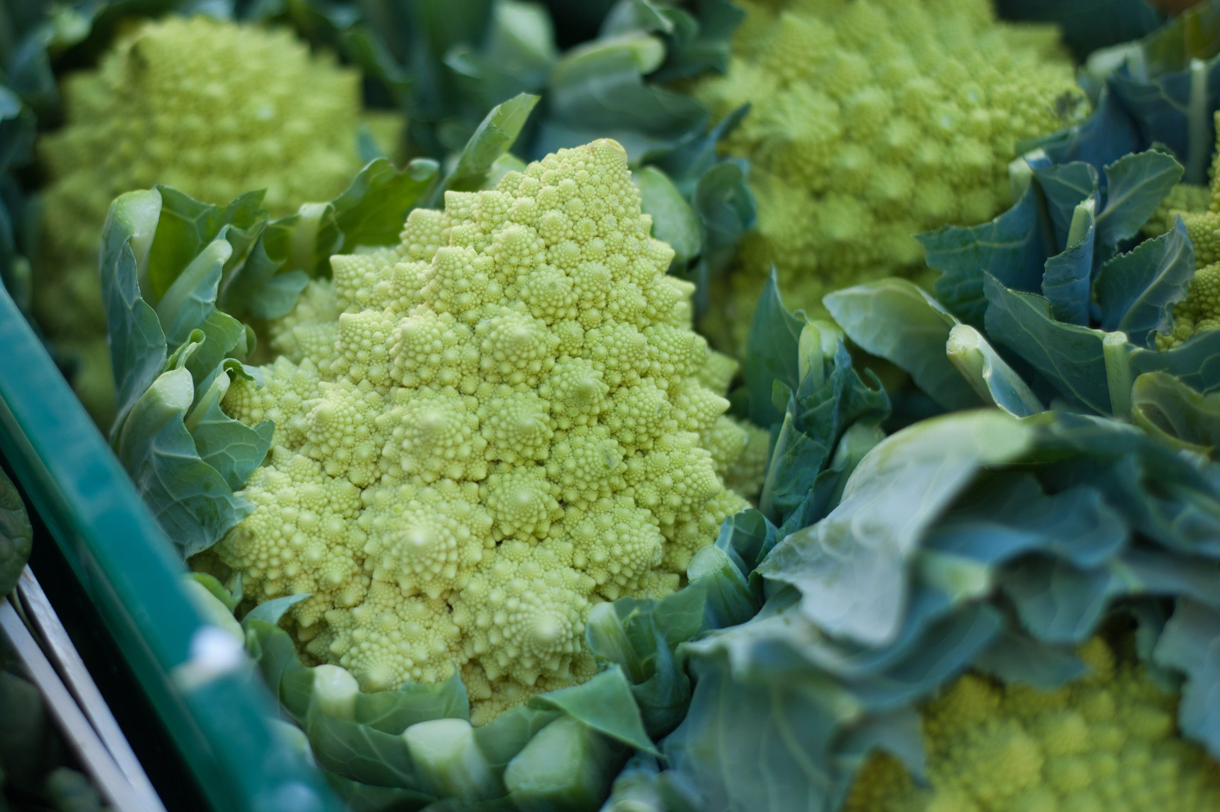 broccoli-close-up-colors-76083.jpg
