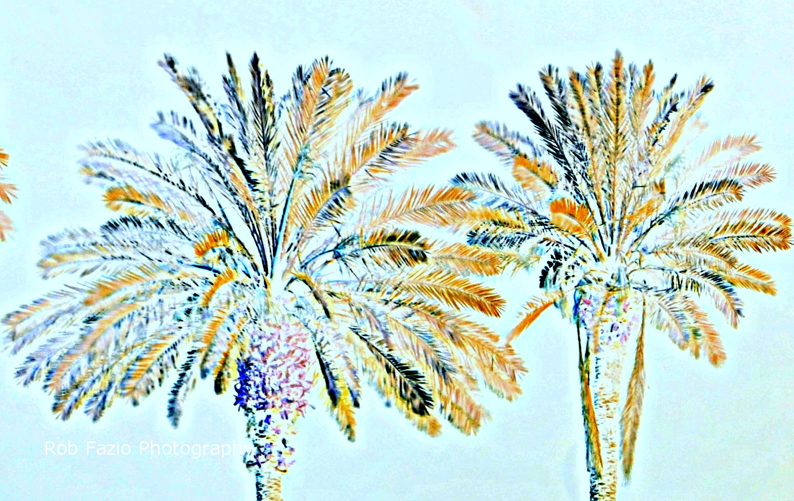 Study in Palm 2