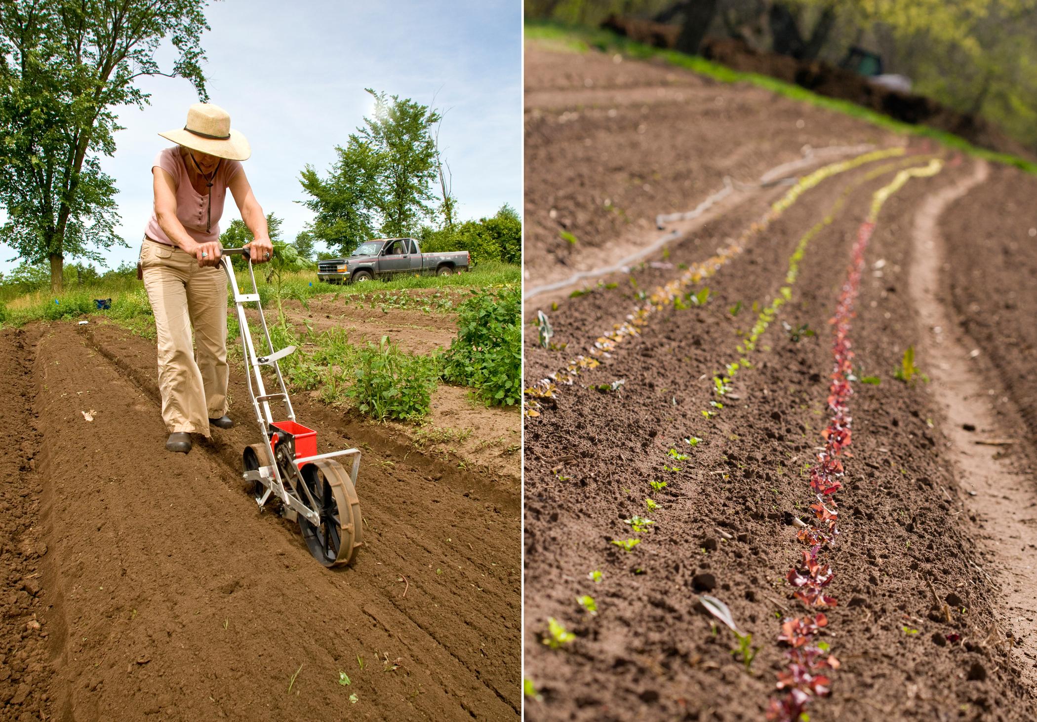 farm photography planting seeds organic