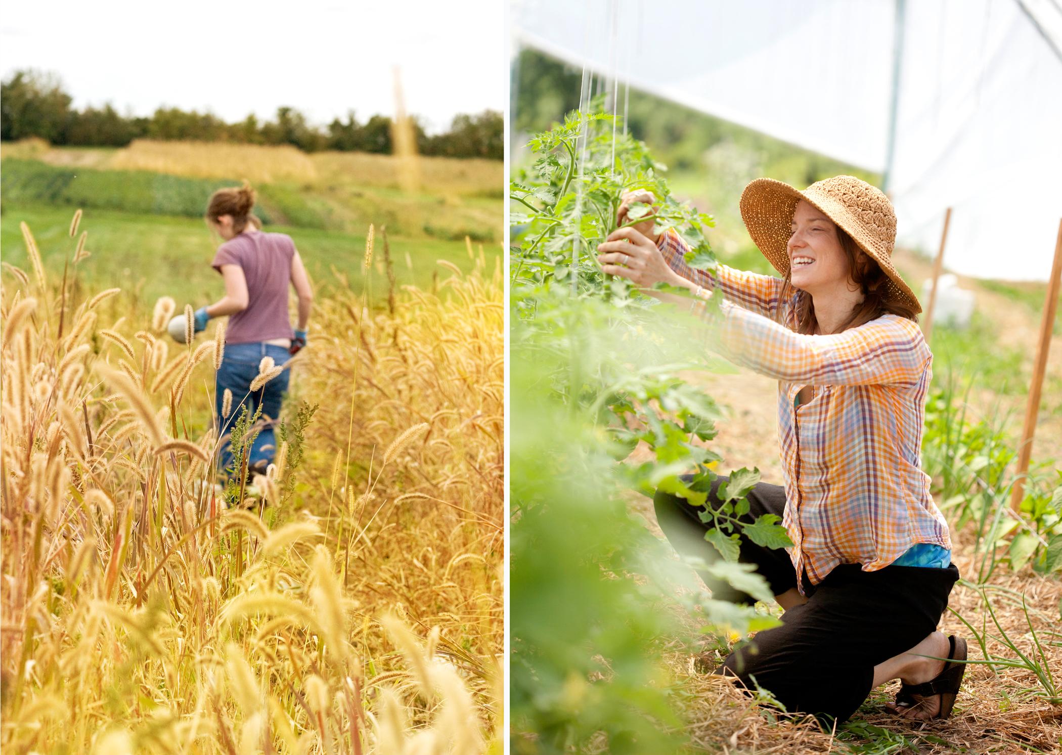 farm photography squash harvest minnesota