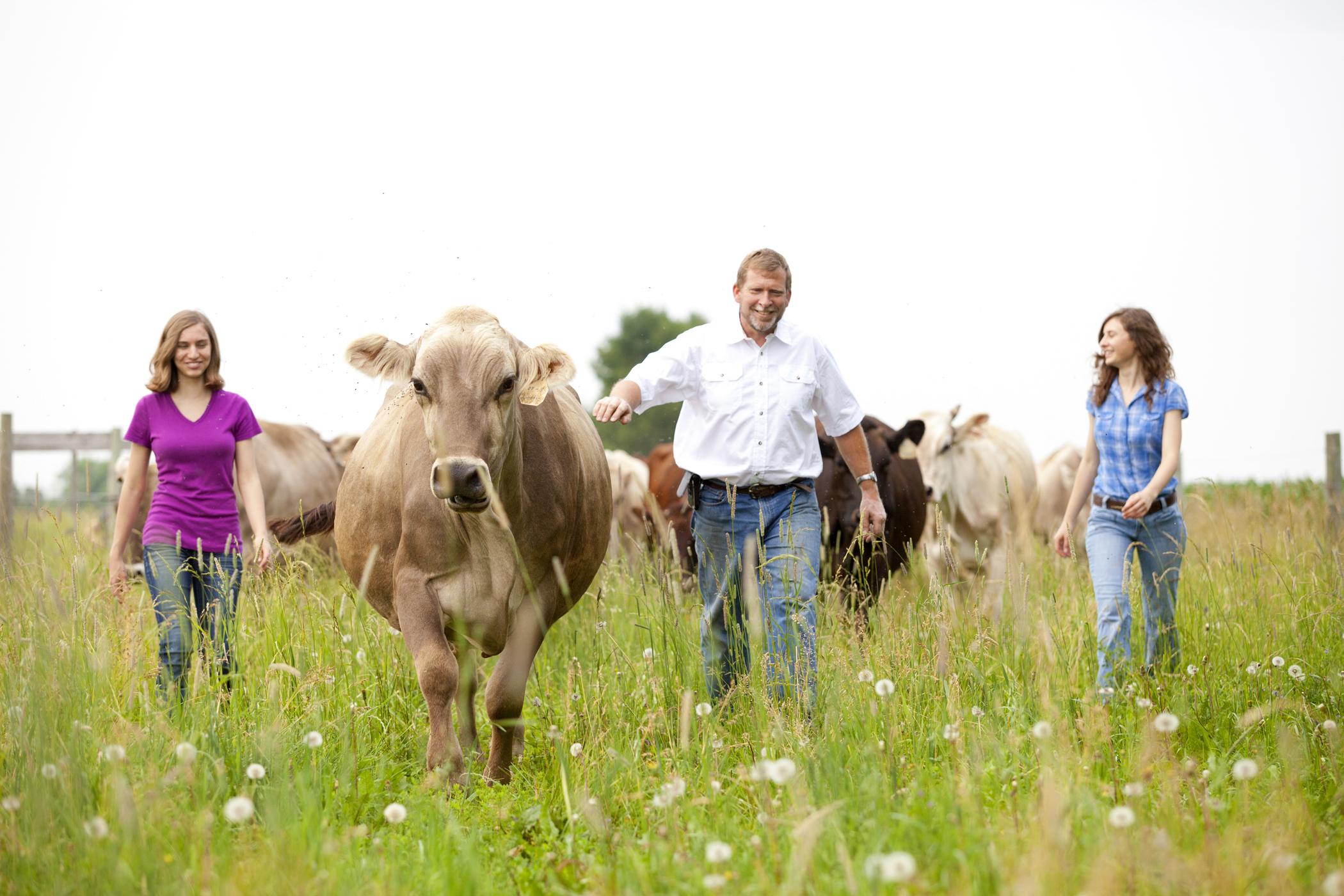 farm photography organic dairy farmers cows