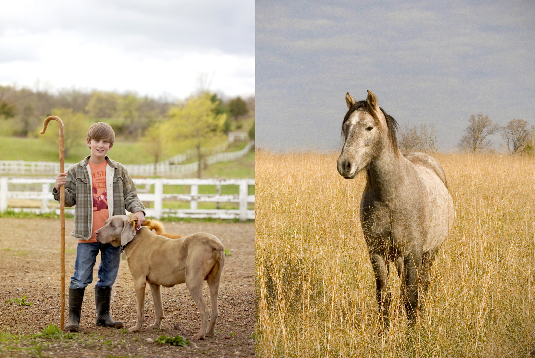 farm photography of boy sheepherder, dog and horse