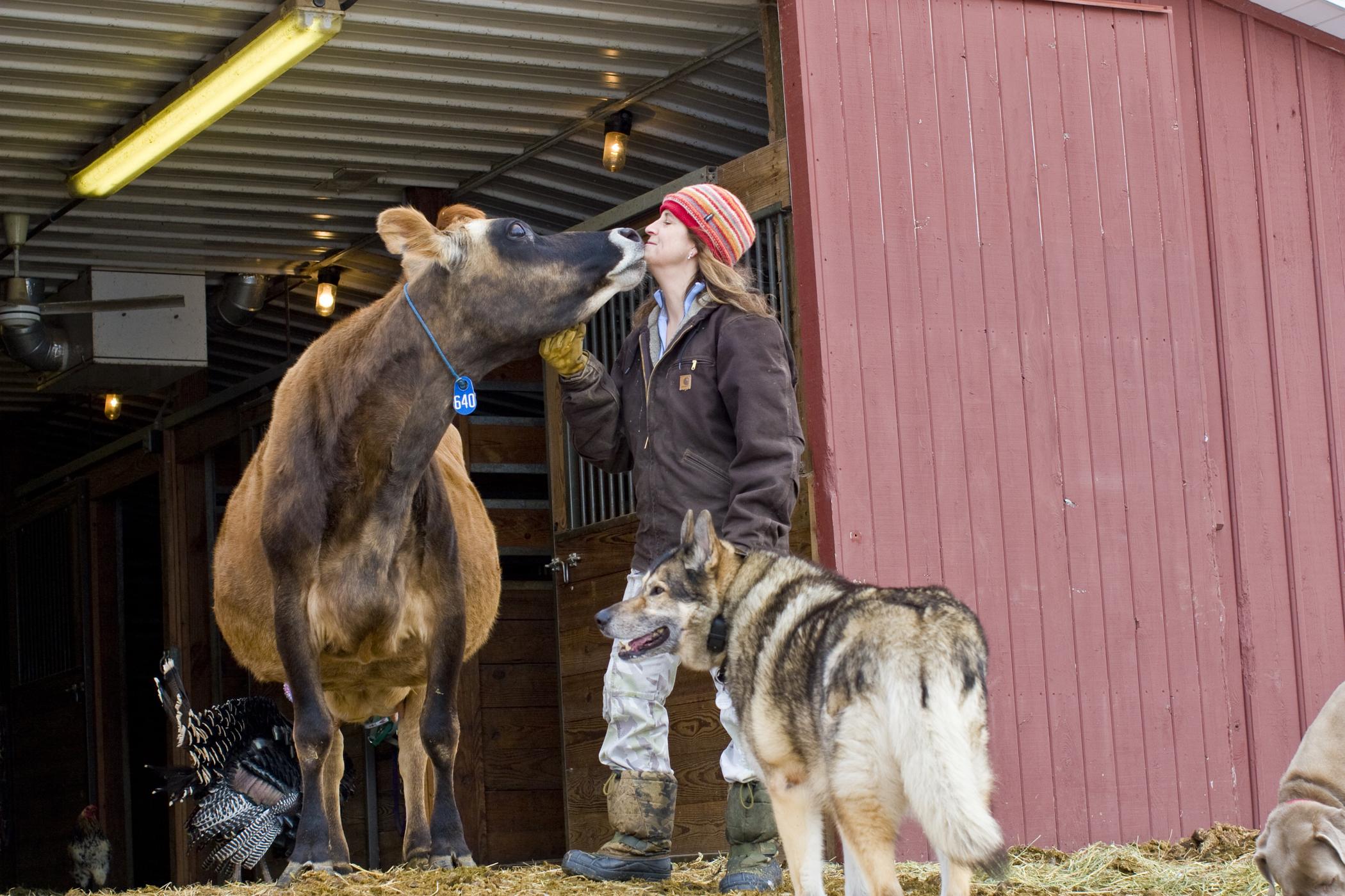 farm photography farmer with cow dog turkey at barn