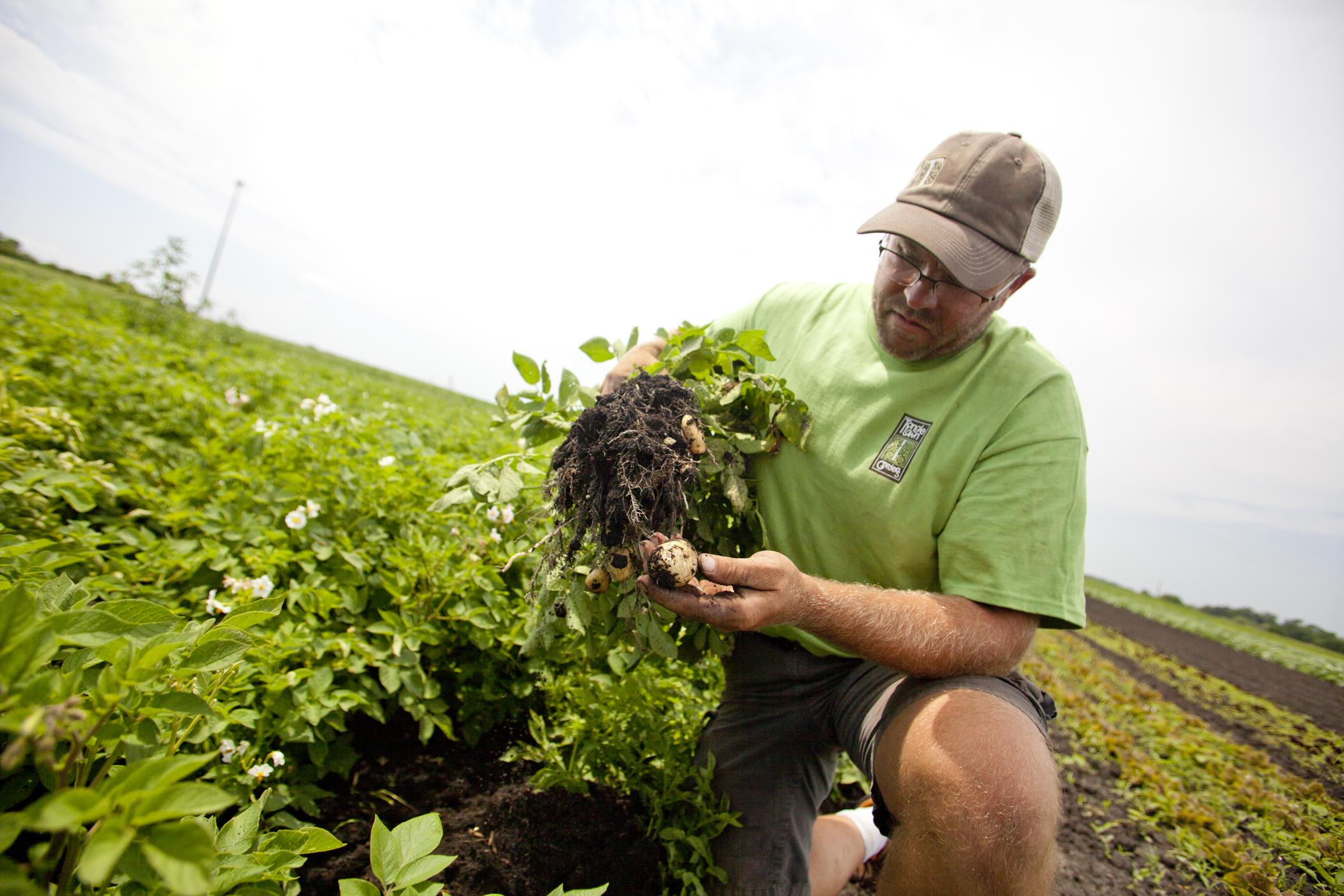 farm photography organic dirt potatoes