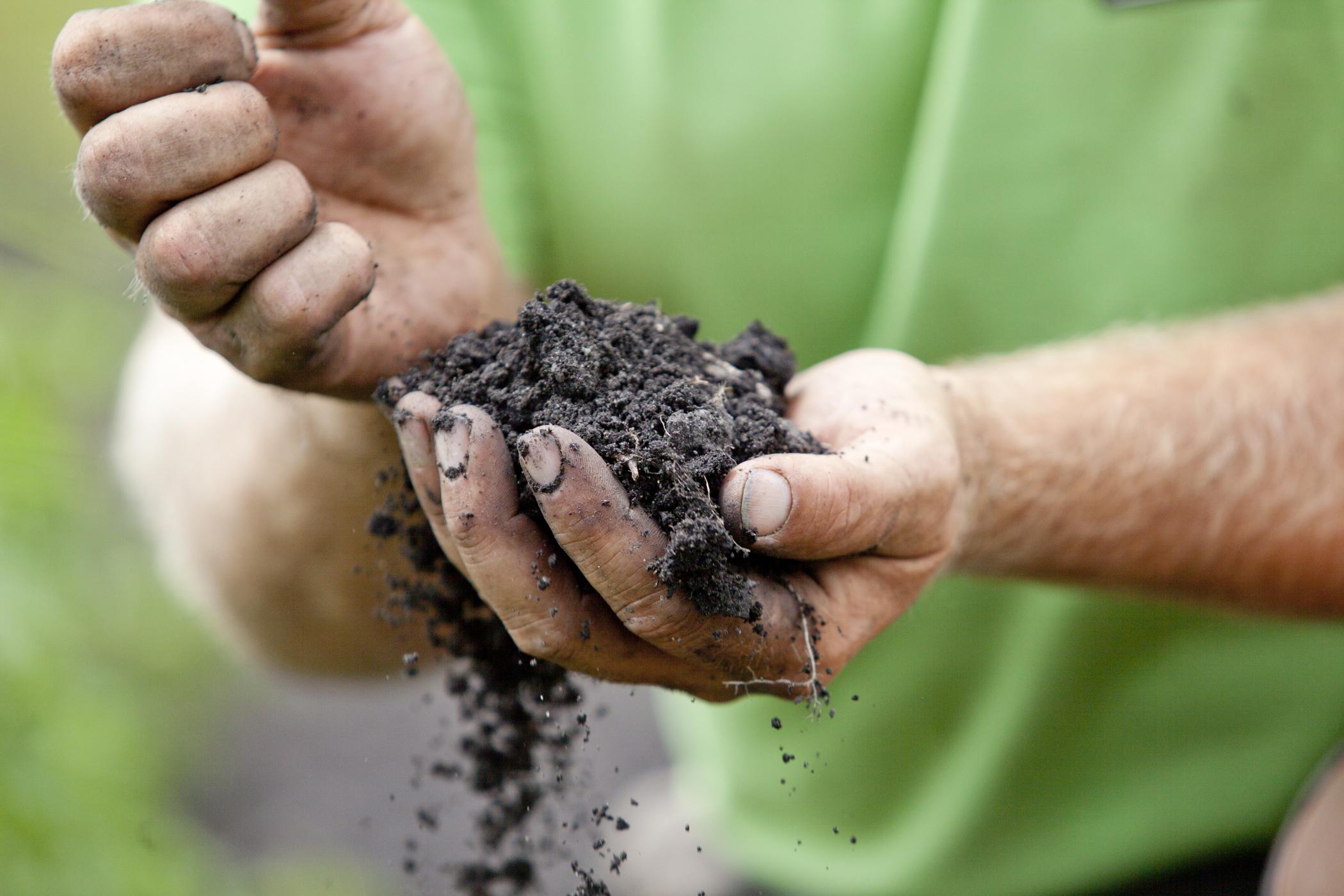 farm photography of organic soil in farmer hands