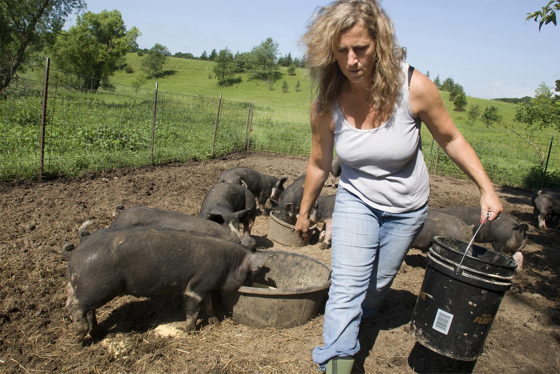 farm photography of organic pig farmer minnesota