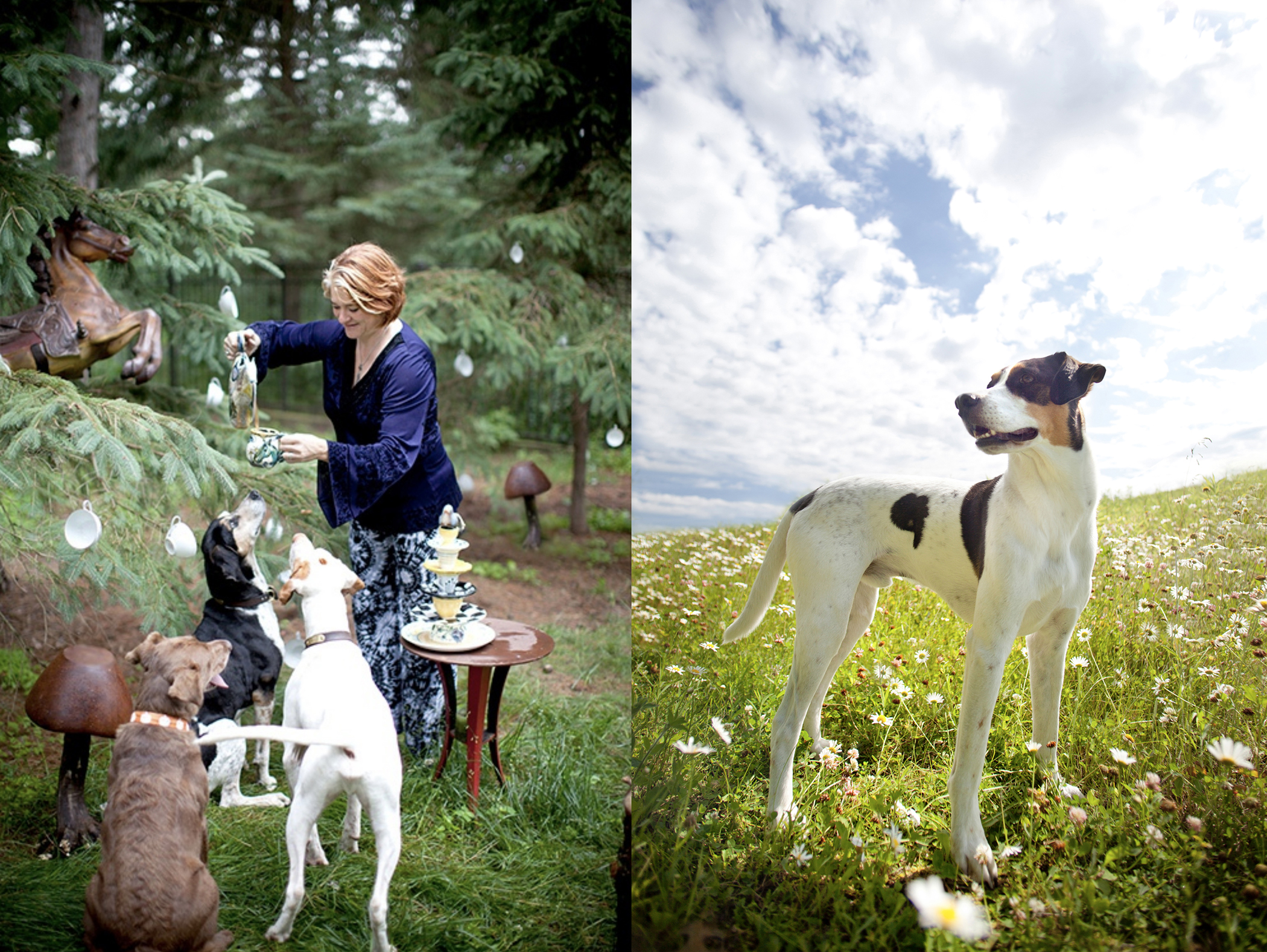 editorial lifestyle photography dogs