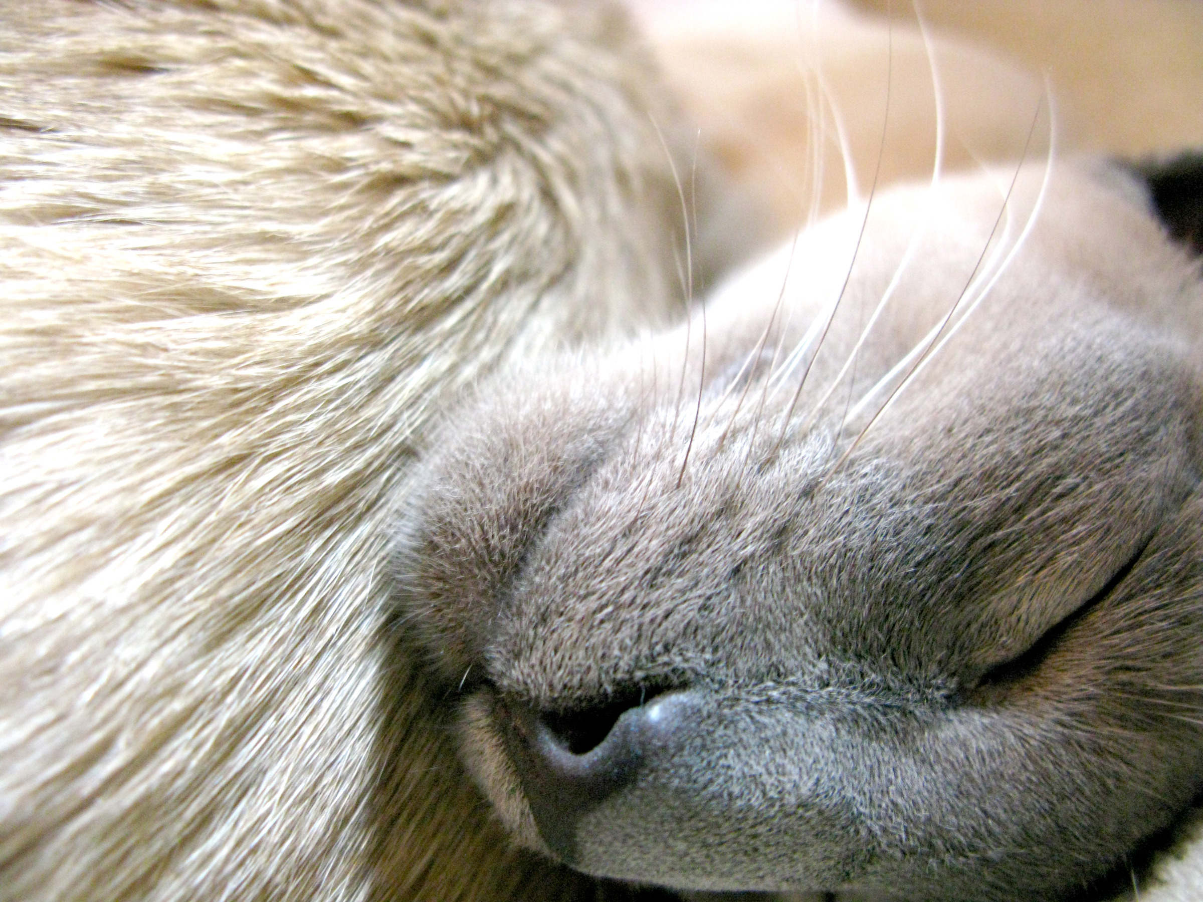 cat animal photography