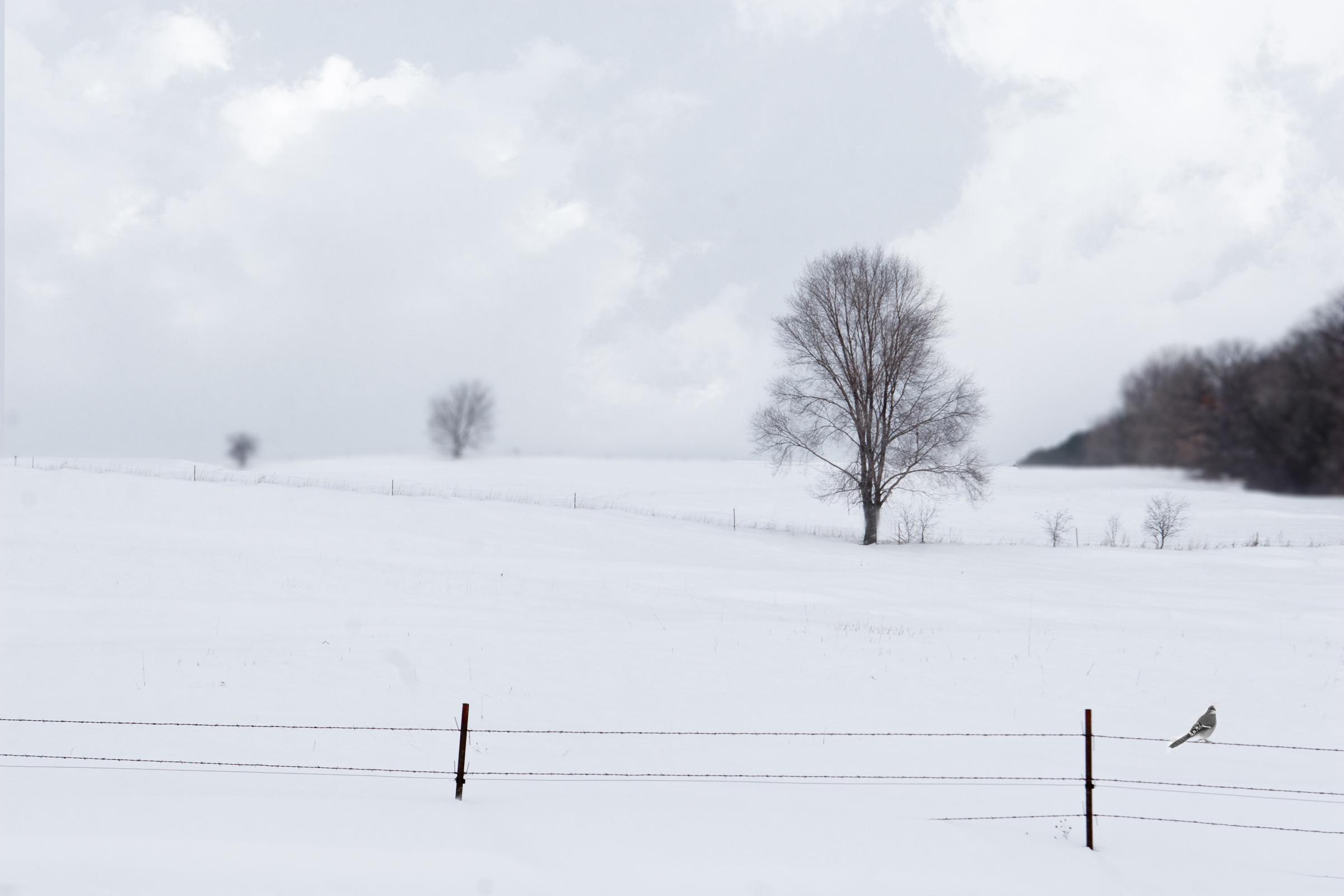 nature photography winter bird