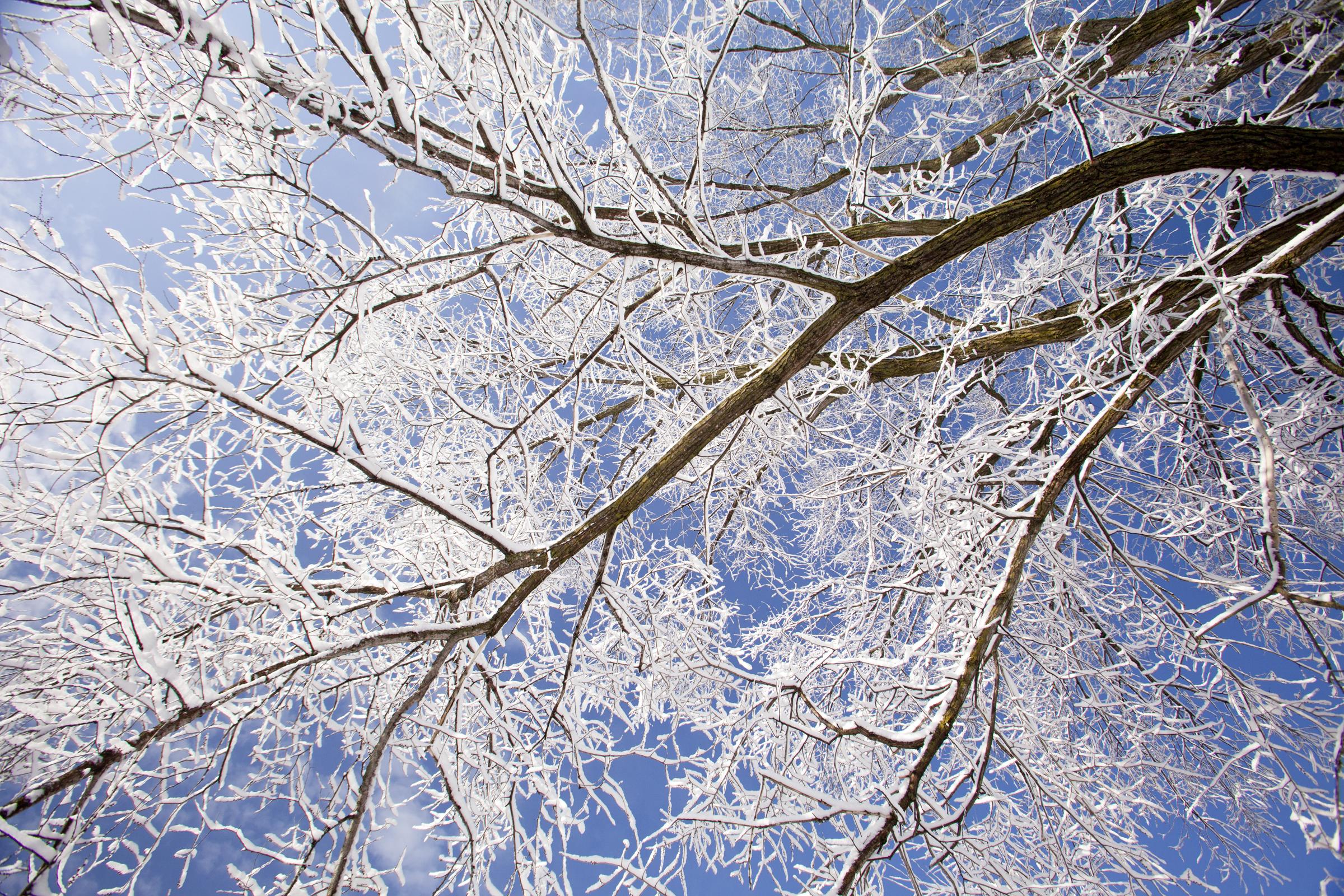 nature photography winter tree snow
