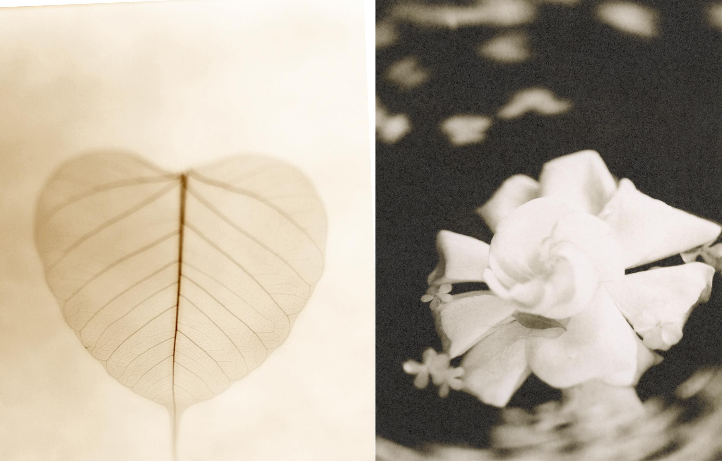 art photography sepia flowers