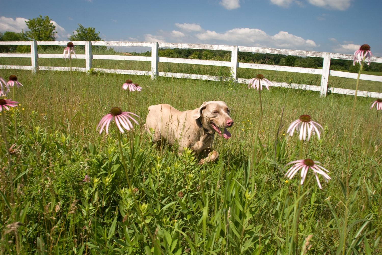 animal photography dog farm
