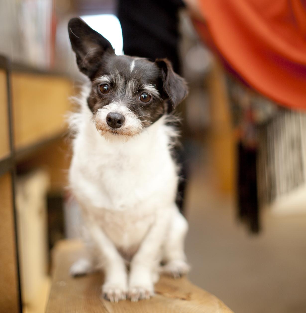 portrait dog recordcrop.jpg