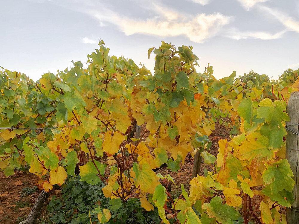 b grapevine.jpg