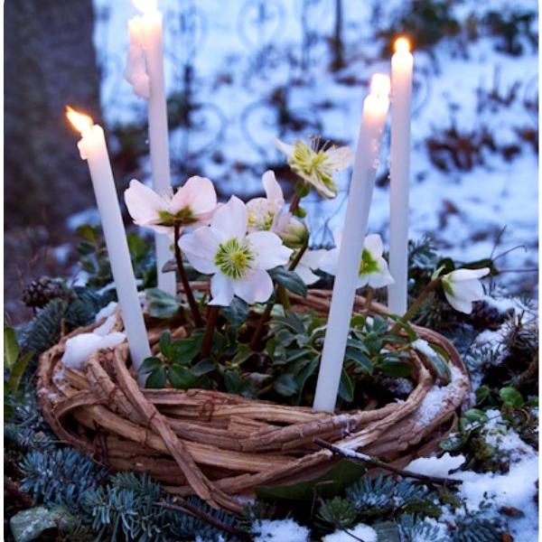 No winter lasts forever, no spring skips its turn. - Hal Borland
