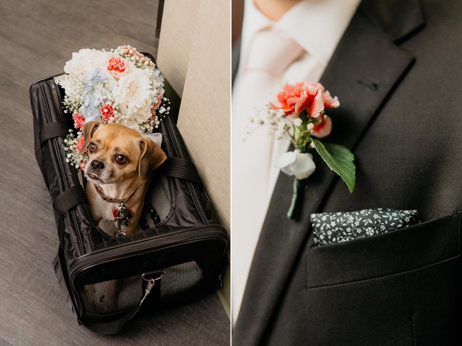 Manhattan City Clerk Elopement with Dog