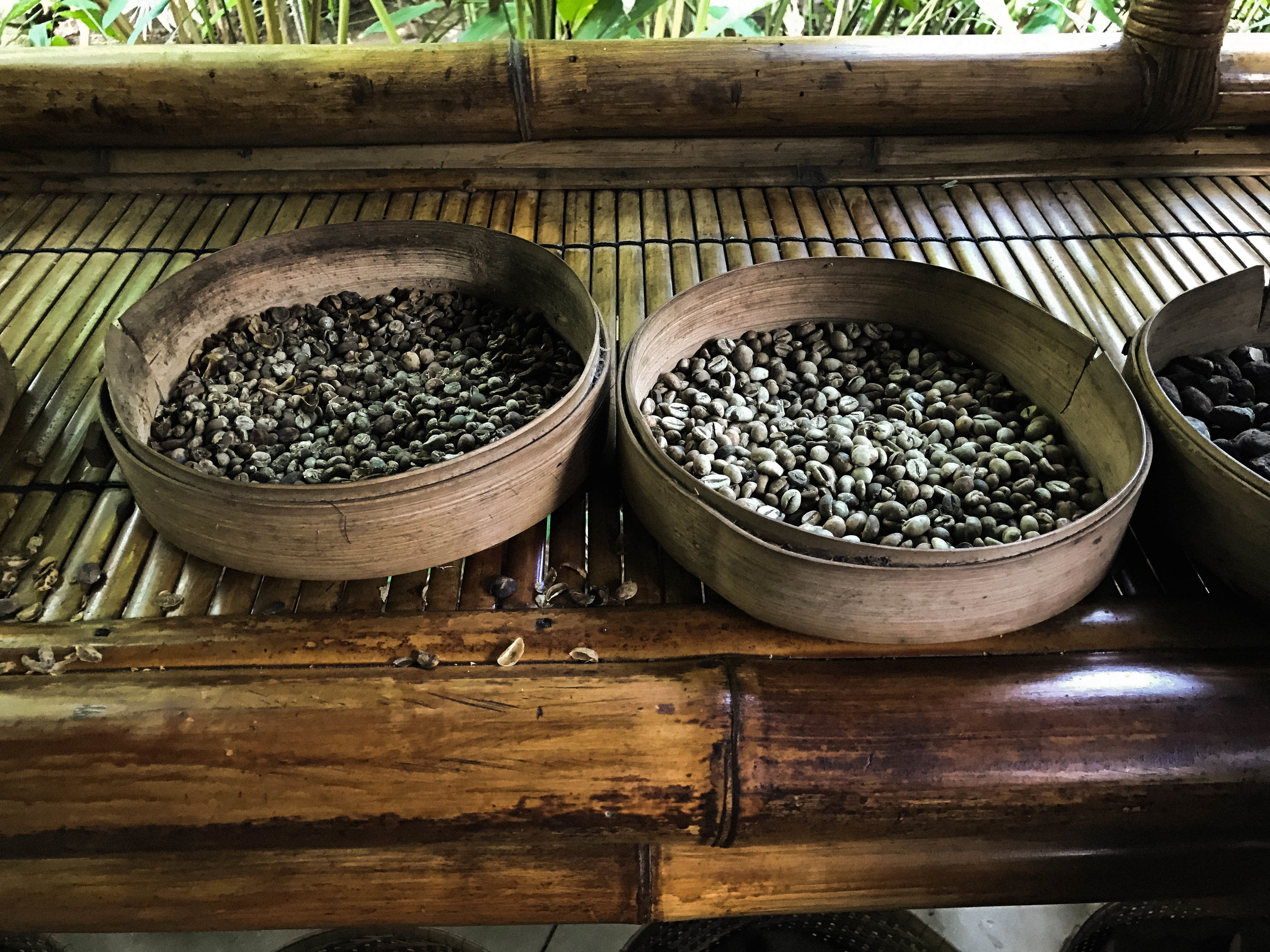 Trying Luwak Coffee in Bali, Indonesia