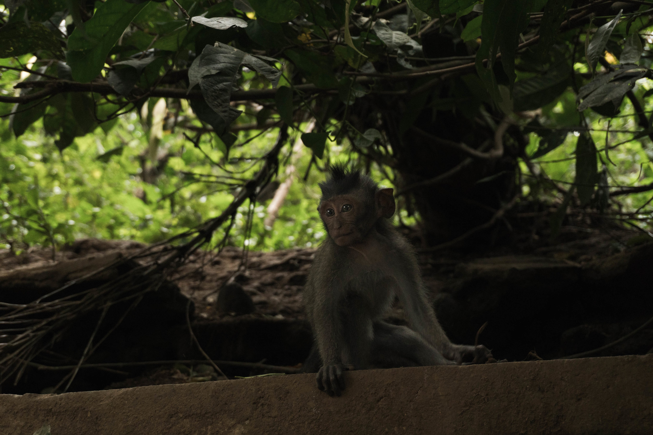 The Sacred Monkey Forest in Ubud, Indonesia