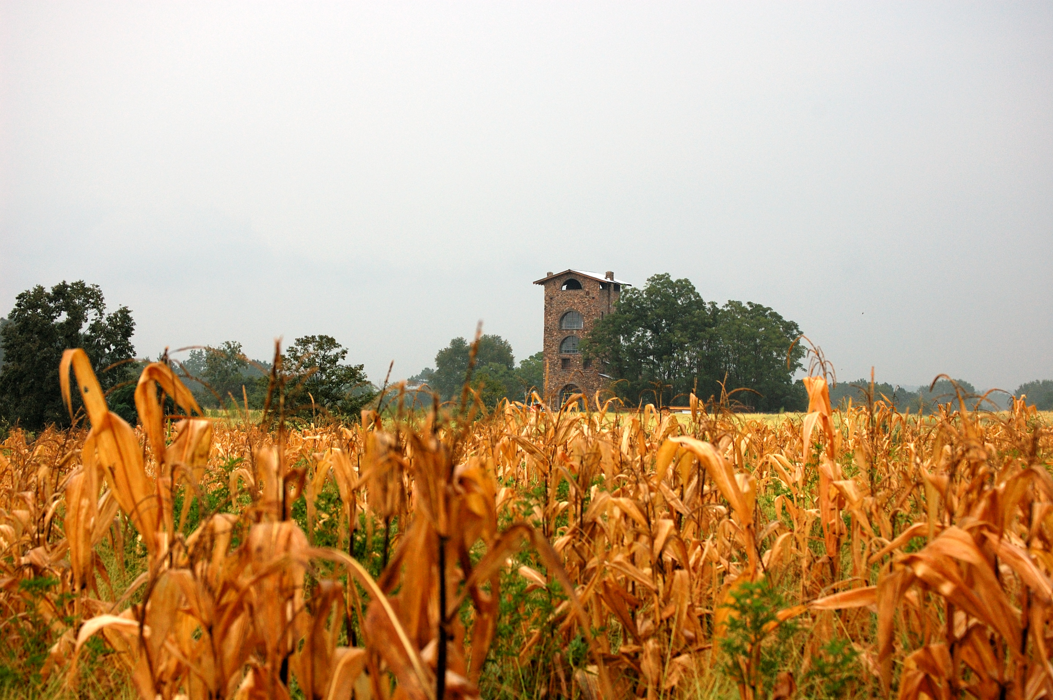 tower from field.jpg