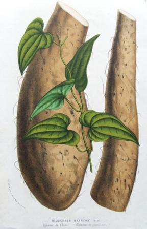 botanical-yam_.jpg