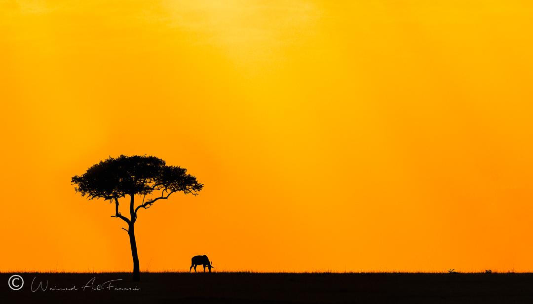 Serengeti Landscape