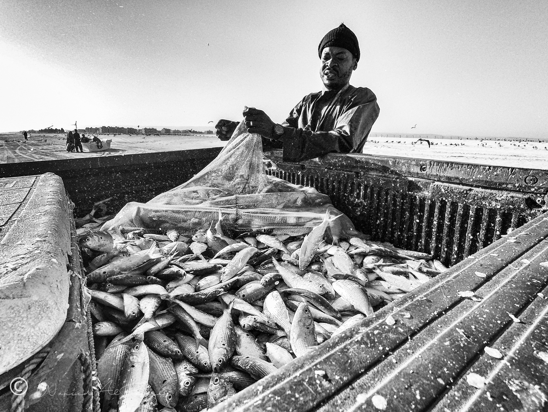 Sardine Fishing | Oman