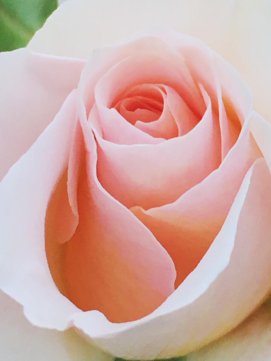 Roses at Vajra Yogini