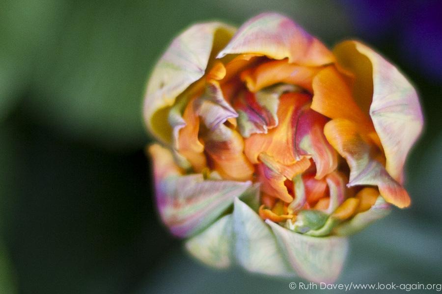 Look-again-ruth-davey-mindful-photography-training-6959.jpg