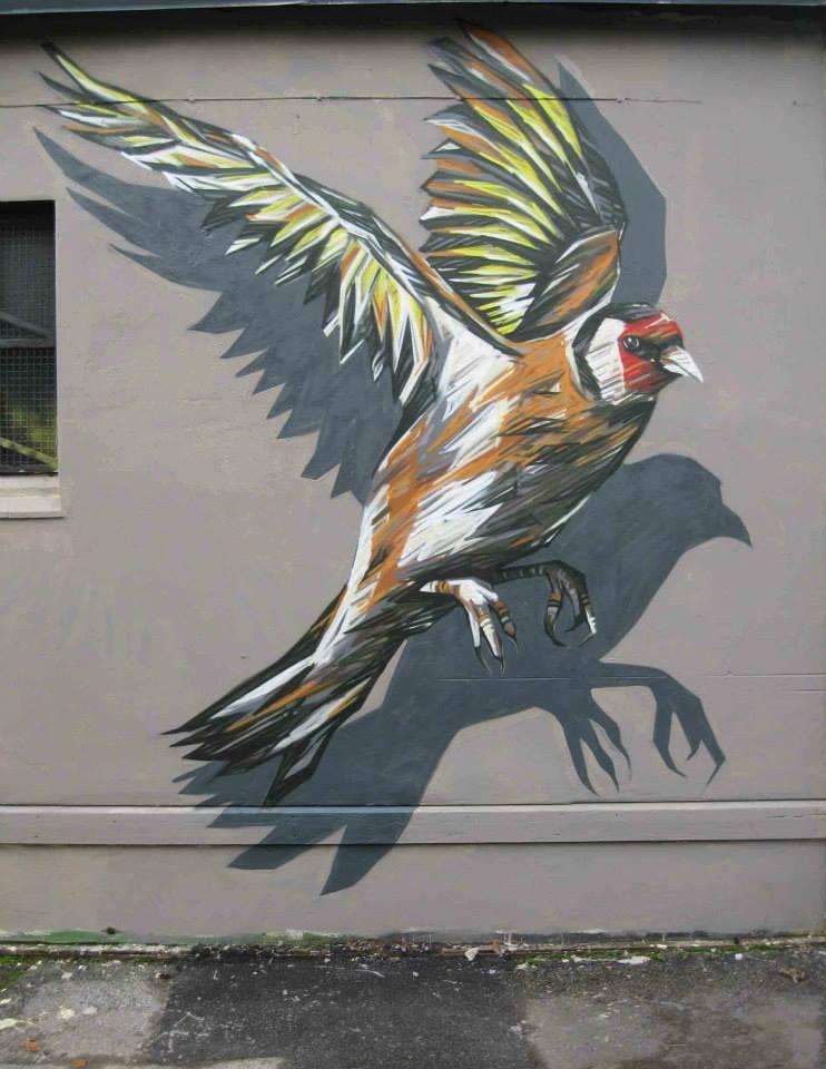 Dropshadow Finch