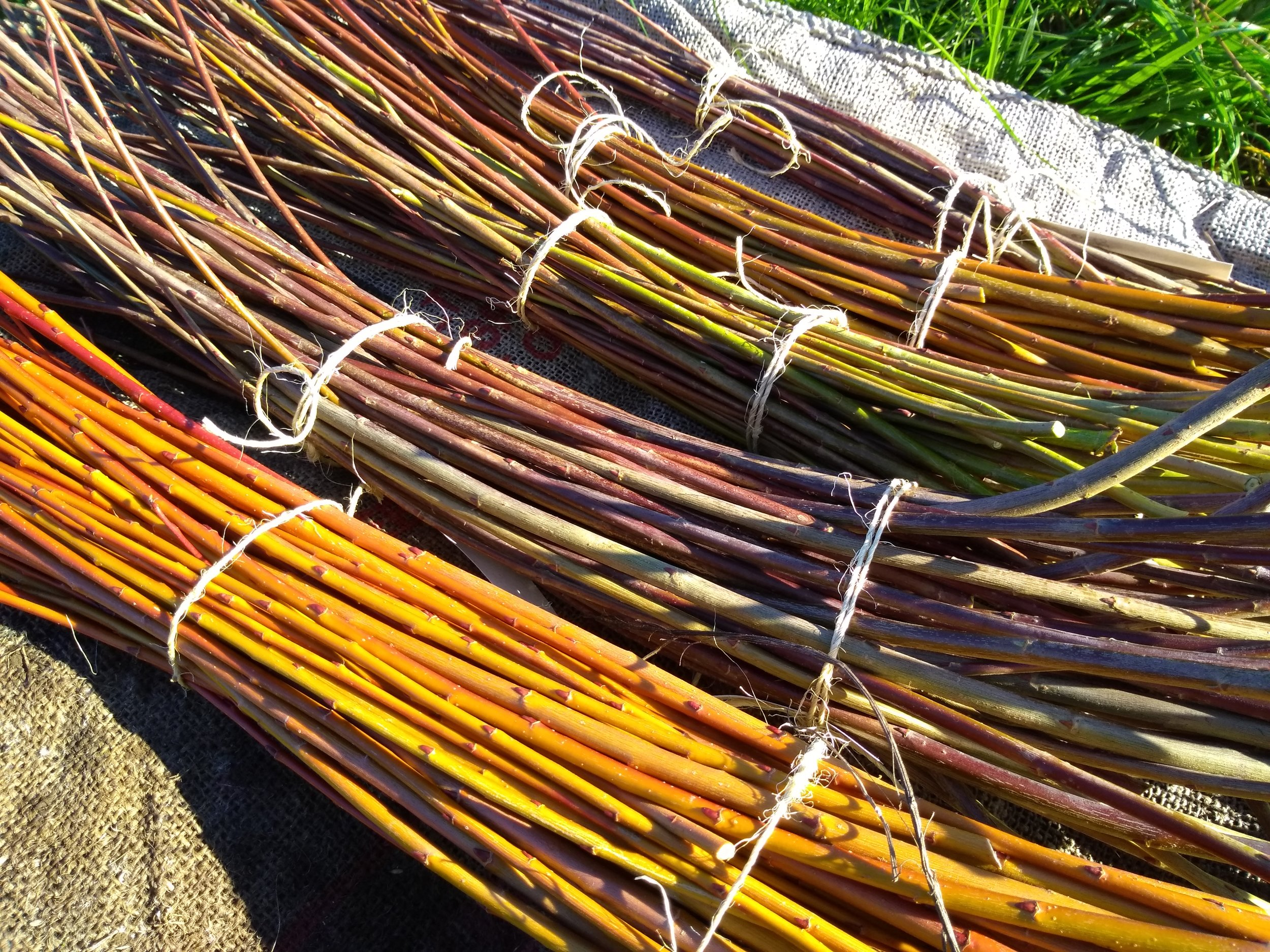 Beautiful Willow to cure and weave!