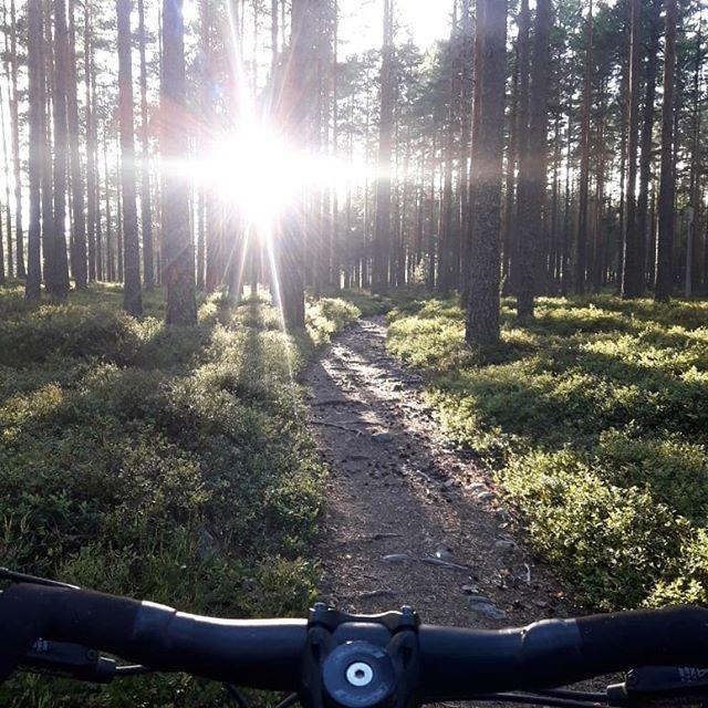 Jag är så glad över att bo där det kryllar av såna här stigar!  #uradventures #duärdittäventyr #mtb #falustigcyklister #falun #grycksbo #onone #ononecodeine #ononebikes #stigcykling