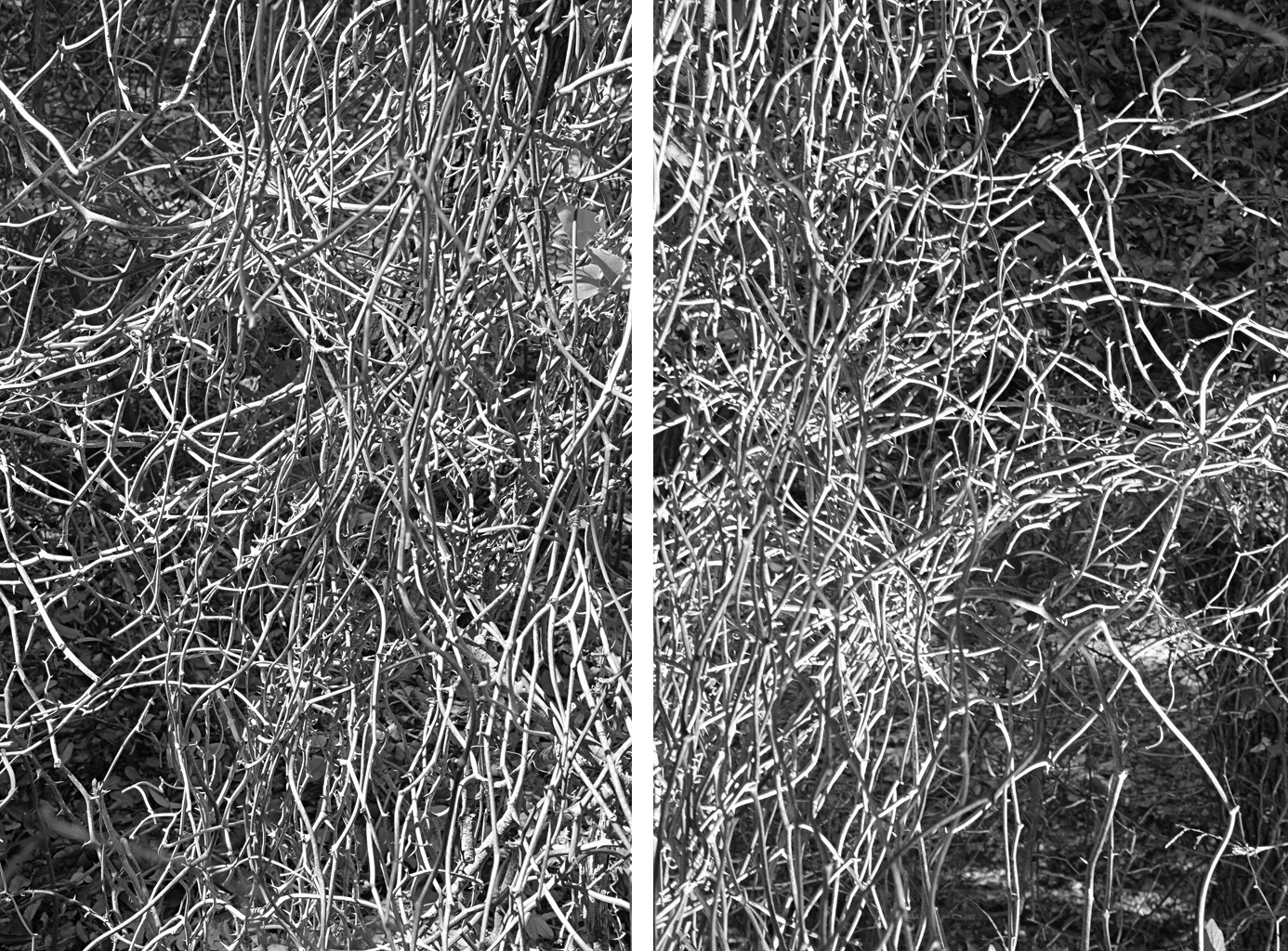 Where chaos becomes order (Diptych)