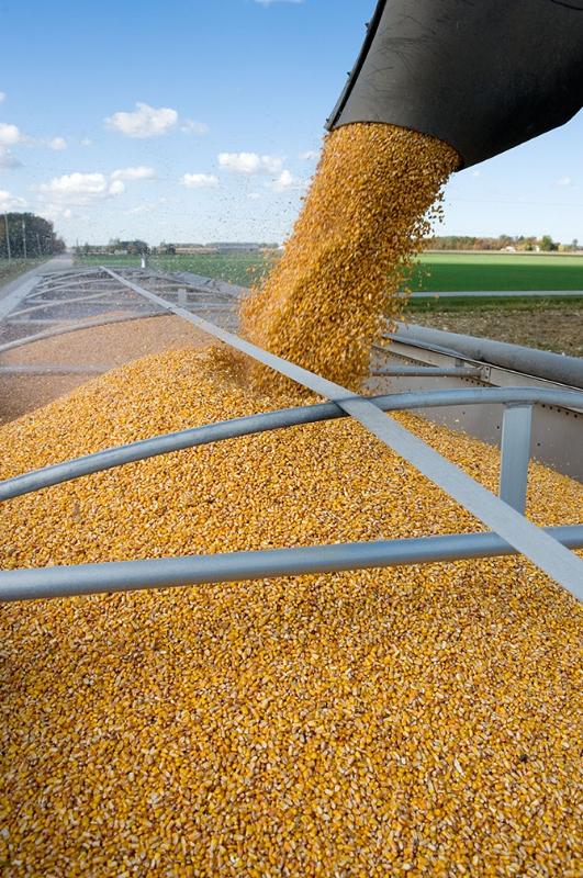 corn harvest wagon-w.jpg