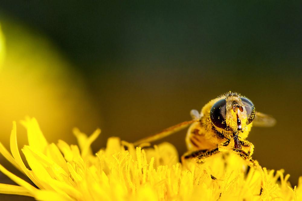 bee pollen-1000.jpg