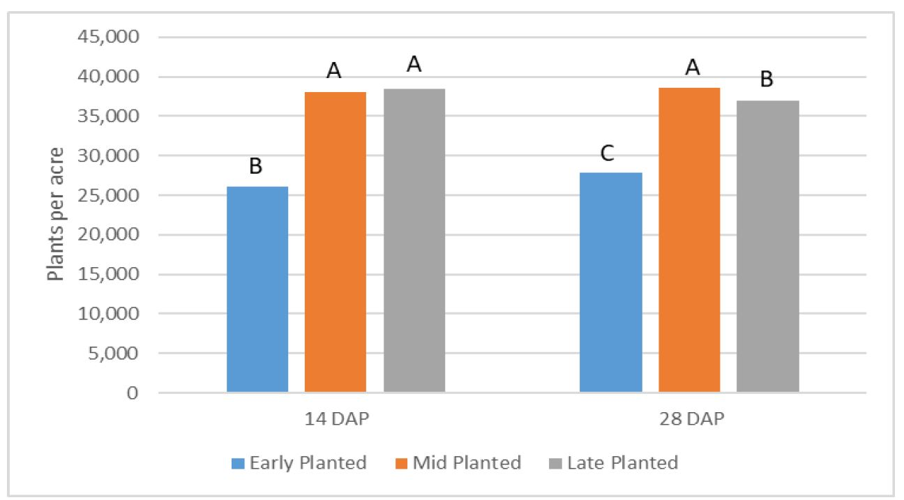 Figure 1. Impact of planting date on plant stand in plants per acre 14 and 28 days after planting (DAP). Columns with different letters indicates that values are significantly different within stand date at the P = 0.05 level.