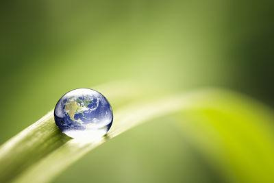 globe on leaf