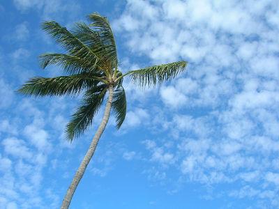 Palm-Tree-172241676_1183x887_opt.jpg