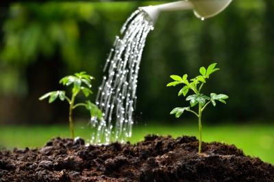 Young-plants-501061554_1256x838.jpeg