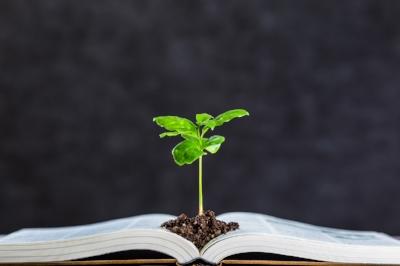 Books-and-plant-611318356_1258x838.jpeg