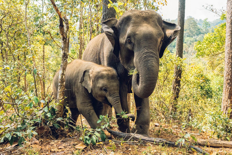 Thailand-Travel-Tips-54.jpg