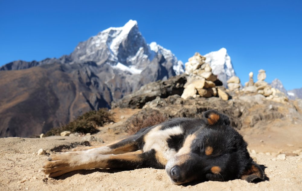 Dog resting in the sun on the trail