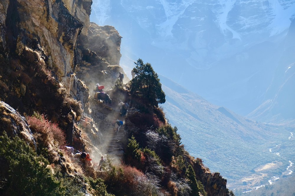Yaks descending a ridge trail