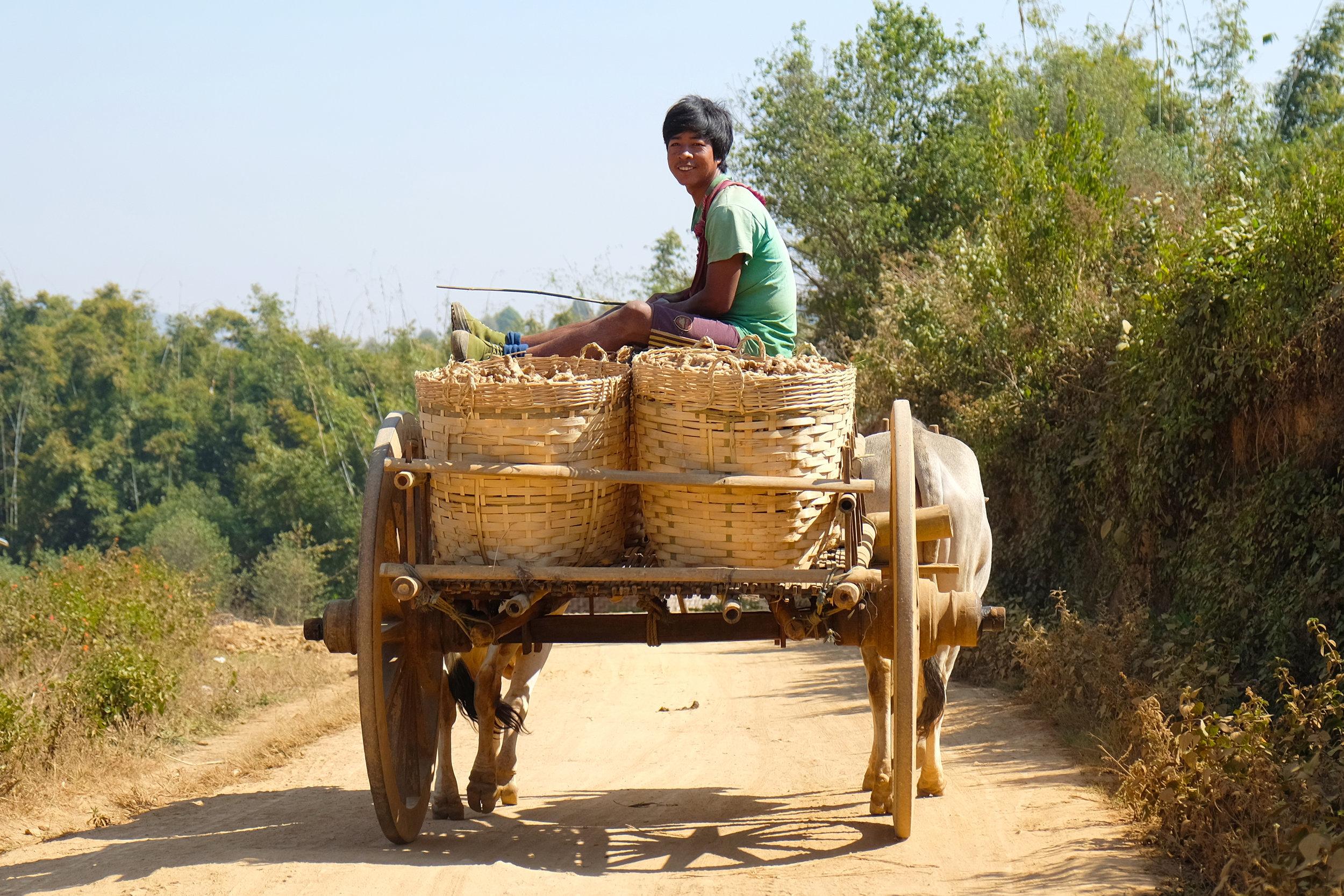 Pa-o tribe boy taking ginger to market
