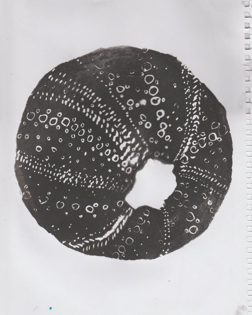sea-urchin-print9.png